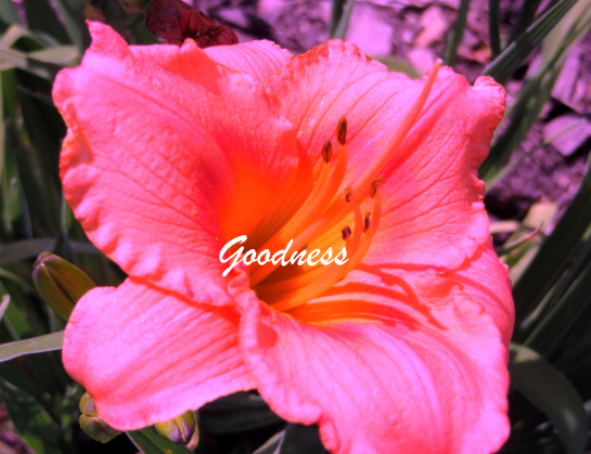 Friday goodness July 5th  IMG_0039